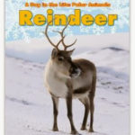 Nonfiction Reindeer Close Read {freebie}